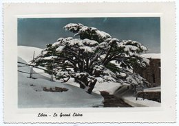 LIBAN/LEBANON - LE GRAND CEDRE (EDITION JEANGUL) - Libano