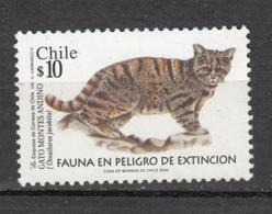 Chili, Chile, Chat, Cat - Hauskatzen