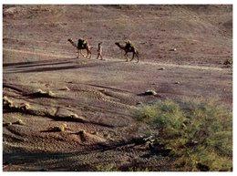 (385) France Territory Of Afars And Issas (Djibouti) Camel Caravane In Desert - Djibouti