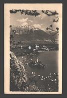 Bled - Eglise Sainte Marie Du Lac - Photo Card - 1954 - Yougoslavie