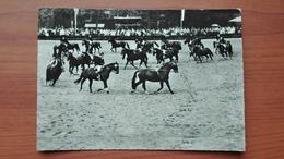 Hengstparade Landgestut Warendorf - Horse Show