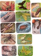 12 Cromos De Insectos. - Sin Clasificación