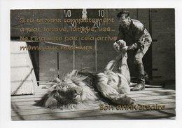Lion: Lion Faisant La Sieste Avec Dompteur (18-3105) - Lions