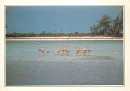 CP Explicative-Bahamas-Ile De Calcos                    L2684 - Bahamas