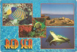 RED SEA.  (scan Verso) - Autres