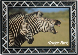 Kruger Park - Burchell's Zebra / Bontsebra - (South Africa) - Zuid-Afrika