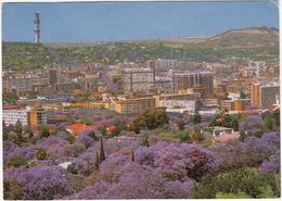 Pretoria - City Of Jacarandas - Jakarandastad - (Transvaal, South Africa) - Zuid-Afrika
