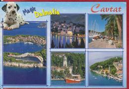 CAVTAT, DOG DALMATIAN CROATIA POSTCARD USED - Croatia