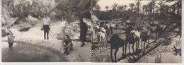 TUNISIE  /  TOZEUR   /  1959 , 2  Photos ,  OASIS   Troupeau De Chèvres  Et Baignade - Orte