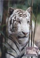 D35429 CARTE MAXIMUM CARD FD 2015 NETHERLANDS - WHITE TIGER CP ORIGINAL - Big Cats (cats Of Prey)