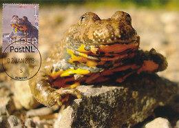 D35432 CARTE MAXIMUM CARD FD 2018 NETHERLANDS - YELLOW-BELIED TOAD SONNEUR CP ORIGINAL - Reptiles & Amphibians