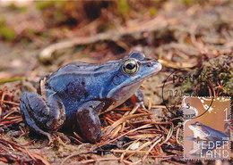 D35434 CARTE MAXIMUM CARD FD 2018 NETHERLANDS - BLUE MOOR FROG GRENOUILLE CP ORIGINAL - Frogs