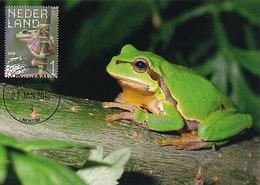 D35435 CARTE MAXIMUM CARD FD 2018 NETHERLANDS - EUROPEAN TREE FROG RAINETTE VERTE CP ORIGINAL - Frogs