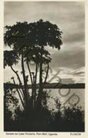 Uganda - Sunset Lake Victoria  [C 2351 - Uganda