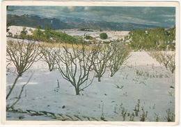 Appelboord, Montague, Kaap / Cape - Apple Orchard, Montague - (South Africa) - MOBILE-SERVICE STATION CALENDAR Postcard - Zuid-Afrika