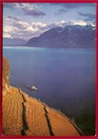 CP Photo Baer-Suisse,Vaud,Lavaux -Vignoble +bateau - Vignes