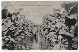Cpa Bon Etat ,   Indonésie , Bornéo , Scene In Tobacco Estate   ,B   N.   Borneocarte Rare , - Indonésie