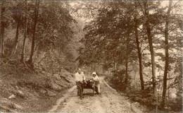 ROCHEFORT - Paysage Au Bois Des Falizes - Rochefort