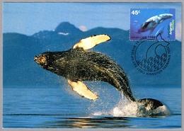 HUMPBACK WHALE. AAT 1995 - Ballenas