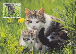 Carte Maximum  1er  Jour    SUISSE   Protection  Suisse  Des  Animaux   CHAT   2004 - Gatti