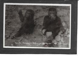 Afrique-Cameroun-YAOUNDE-Parc Zoologique-Carte--Photo De *GORILLES* - Camerún