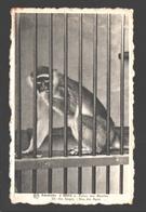 Adinkerke - Meli - Palais Des Abeilles - Eén Der Apen / Un Des Singes - Ape / Singe / Aap - De Panne
