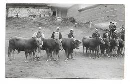 Kosovo Djakovica Animal Market 1936 - Kosovo
