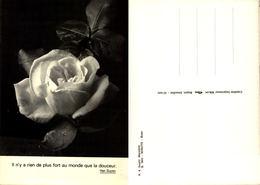 Rose Imalit Maredet N° 8 - Sosoye - Anhée