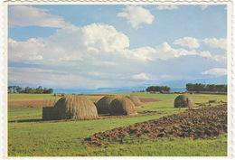 The Grass Township , Zululand - Die Gras-dorp, Zoeloeland  - (South Africa) - Zuid-Afrika