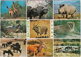 Kruger National Park - African Fauna - (South Africa) - Multiview - Zuid-Afrika