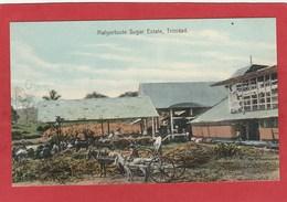CPA: Antilles - Trinidad - Malgortoute Sugar Estate - Sucre - Canne à Sucre - Trinidad