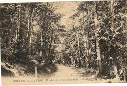 49 - MONTREUIL BELFROY -    Un Sous Bois  61 - Other Municipalities