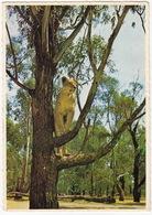Johannesburg - Lion Park : Lioness / Leeuwyfie, Leeupark, Johannesburg - ( South Africa - Suid-Afrika) - Zuid-Afrika