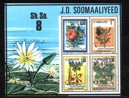 Hb-6 Somaliland - Végétaux
