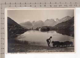 Lötschental Guggisee, Rothörner - Chèvre / Ziege / Goat / Capra - Animaux & Faune