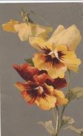 Klein Catharina  -  Edit. Raphael Tuck  &  Sons  ,  Serie  N°. 386 B - Klein, Catharina