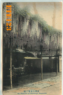 Post Card  - JAPON - Japan - NAGASAKI - The Wistaria Of Daitokuji Nagasaki - Japon