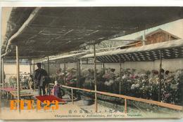 Post Card  - JAPON - Japan - NAGASAKI - Crysanthemum Of Nakashima Hot Spring - Fleurs Chrysanthème    Nagasaki - Japon