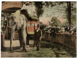 (900) Elephant - Melbourne Zoo Circa 1942 (repro) - Elephants