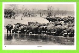 BUFFALO - TROUPEAU DE BUFFLES E ZAMBIE - Carte Vierge - Zambia