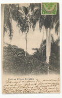 Port Au Prince Torgeau Edit Pharmacie  H. Pohlmann  P. Used Maximum Palm Tree - Haïti