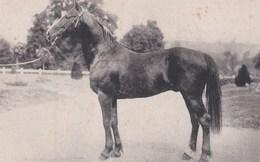 Carte 1931 ECHAUFFOUR CHEZ MR BERTRIN / CHEVAL (chevaux) - Frankreich