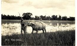 SINGAPOUR  UN BUFFLE  DECEMBRE 1928 MANUSCRIT AU DOS  WATER BUFFALO - Singapour