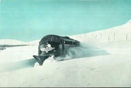"""1536 """" 1950 HP - NOHAB - GM LOCOMOTIVE ON THE BERGEN LINE IN NORWAY """" DOCUMENTO ORIGINALE - Ferrovie"""