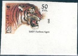 B3762 Russia Rossija Fauna Animal Tiger (50 Rubel) Organization Colour Proof - Varietà E Curiosità