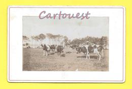Photographie Ancienne, 16.50 Cm 10.70 Cm, PAYSANNE PAYSAN Troupeau De VACHE ( Embossage Du Photographe Bord Inférieur ) - Fotos