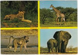 Wild Life - Dierelewe ( Lioness, Giraffe, Baboon, Elephant)  - (Suid-Afrika - South Africa) - Zuid-Afrika