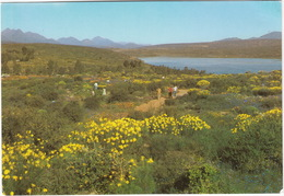 Clan William: Wild Flower Reserve -  Capeprovince  - (Suid-Afrika - South Africa) - Zuid-Afrika
