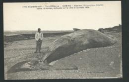 Domino - Ile D'oléron - Baleine Taille 15m échouée Sur La Côte Le 29 Mars 1909   Xg45 - Ile D'Oléron