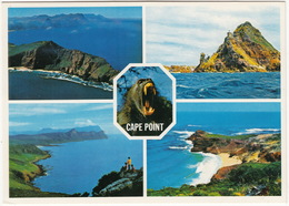 Cape Town: Penisula Tip, Buffels Bay, The Cape Of Good Hope, Baboon, Indian & Atlantic Ocean - (South Africa) - Zuid-Afrika